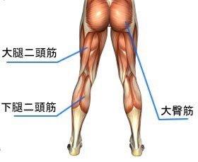 「大腿二頭筋 大臀筋 画像」の画像検索結果